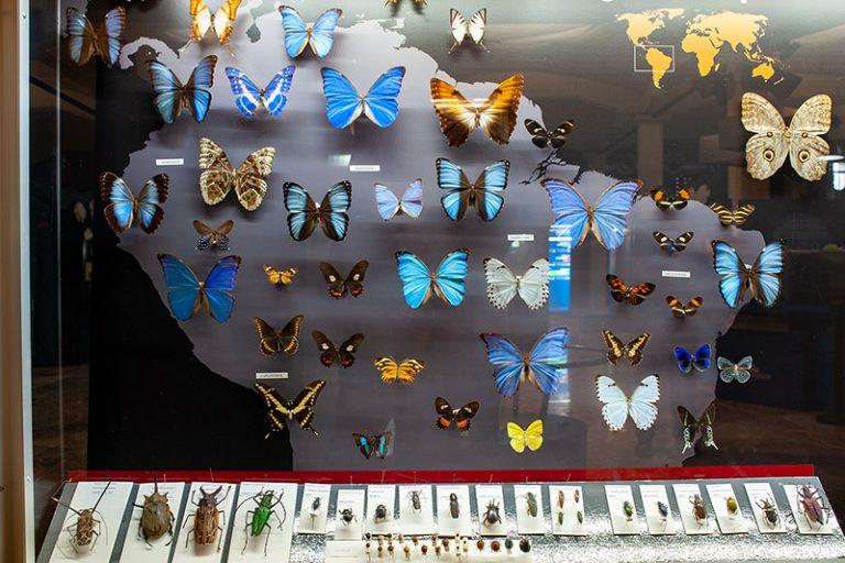 módulos-mariposas-02-800px