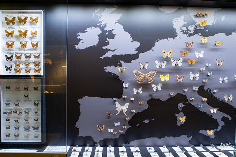 módulos-mariposas-15-800px